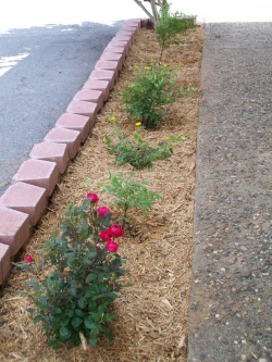 City Hall Flower Bed